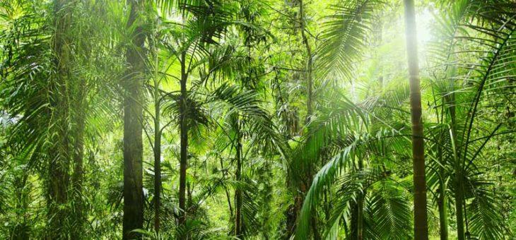Dr. Steidl Aesthetics spendet Bäume in Nicaragua